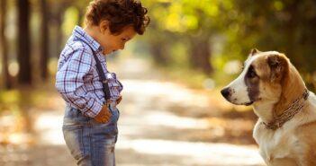 Fremde Tiere: Vom richtigen Umgang und Regeln für Kinder