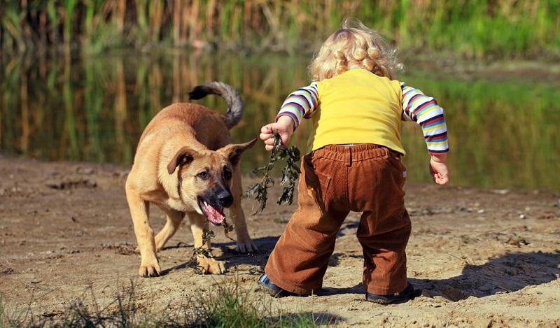 Fremde Tiere: Kinder laufen wegen ihrer geringeren Körpergröße Gefahr, viel schlimmer verletzt zu werden. (#01)