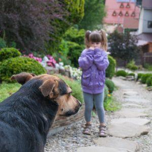 Bei Tieren und ganz besonders bei fremden Tieren und kleinen Kindern ist immer Vorsicht geboten. (#03