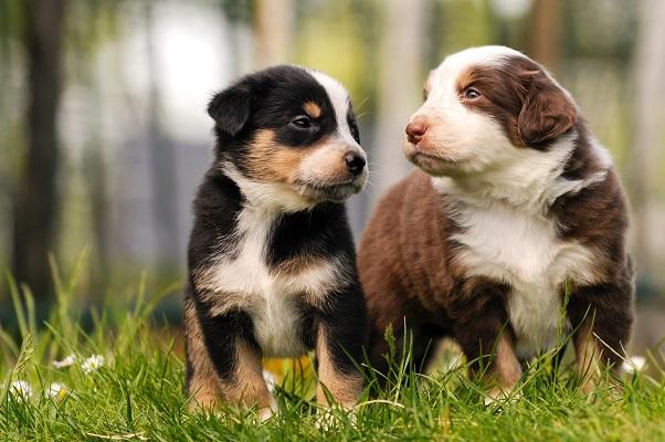 Hunde sind treue Anhänger, die ein Leben lang von ihrem Herrchen oder ihrem Frauchen abhängig sind.