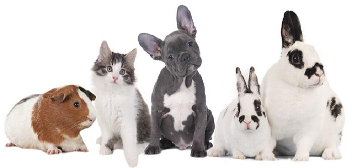 Die richtigen Haustiere für Kinder: Hund vs. Katze
