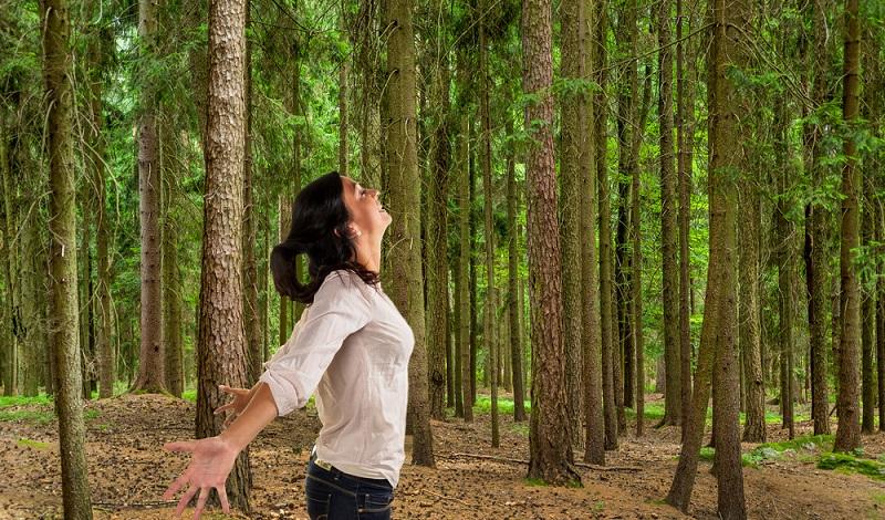Manchmal ist ein langer Waldspaziergang genau das Richtige, um die trüben Gedanken zu verdrängen. (#2)