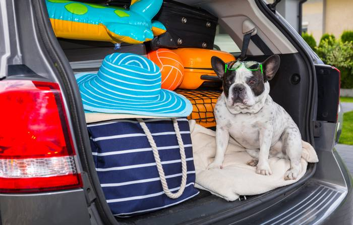 Die Fahrt im Auto ist für den Vierbeiner die angenehmste Art zu Reisen. (Foto: shutterstock - Patryk Kosmider)
